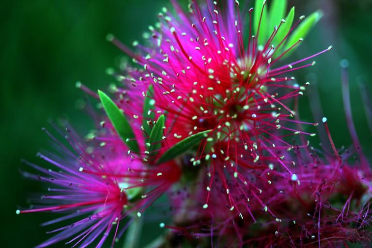photo image c/o digital-art-gallery.com