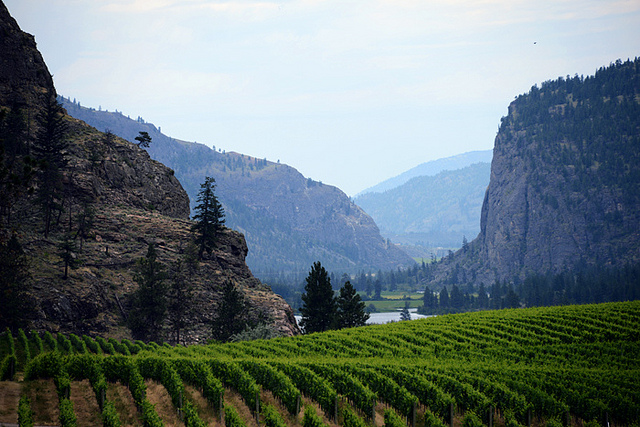 Picture of mountains and vineyard of South Okanagan Valley, British Columbia