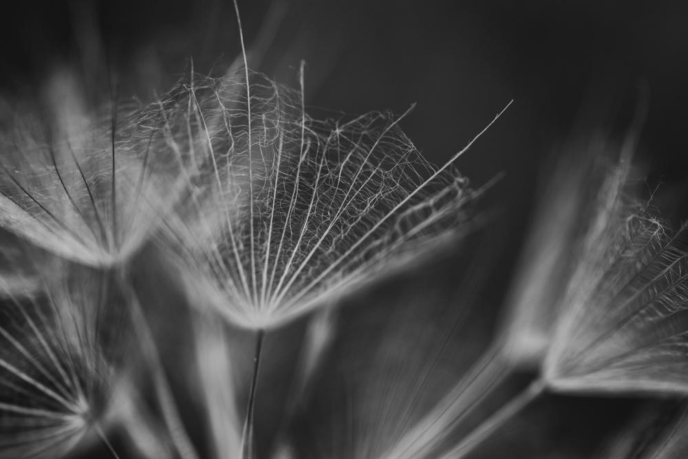 Picture of fragile, inverted umbrella-like flowers, photo by Carolyn C. Meltzer, Atlanta, GA